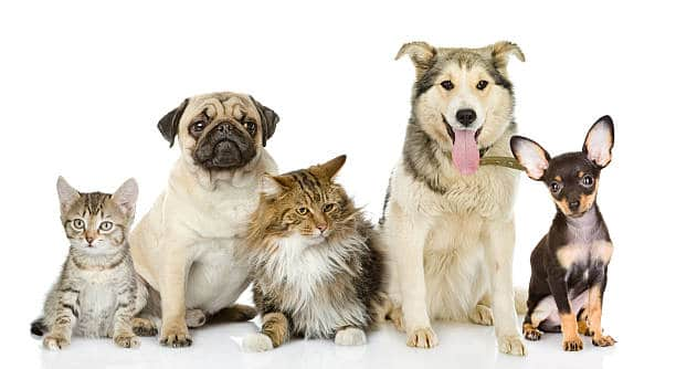 Friars Road Pet Hospital - Cats and Dogs
